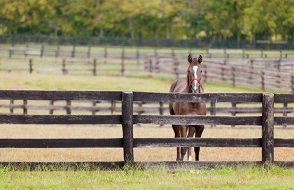 horse-looking-over-fence